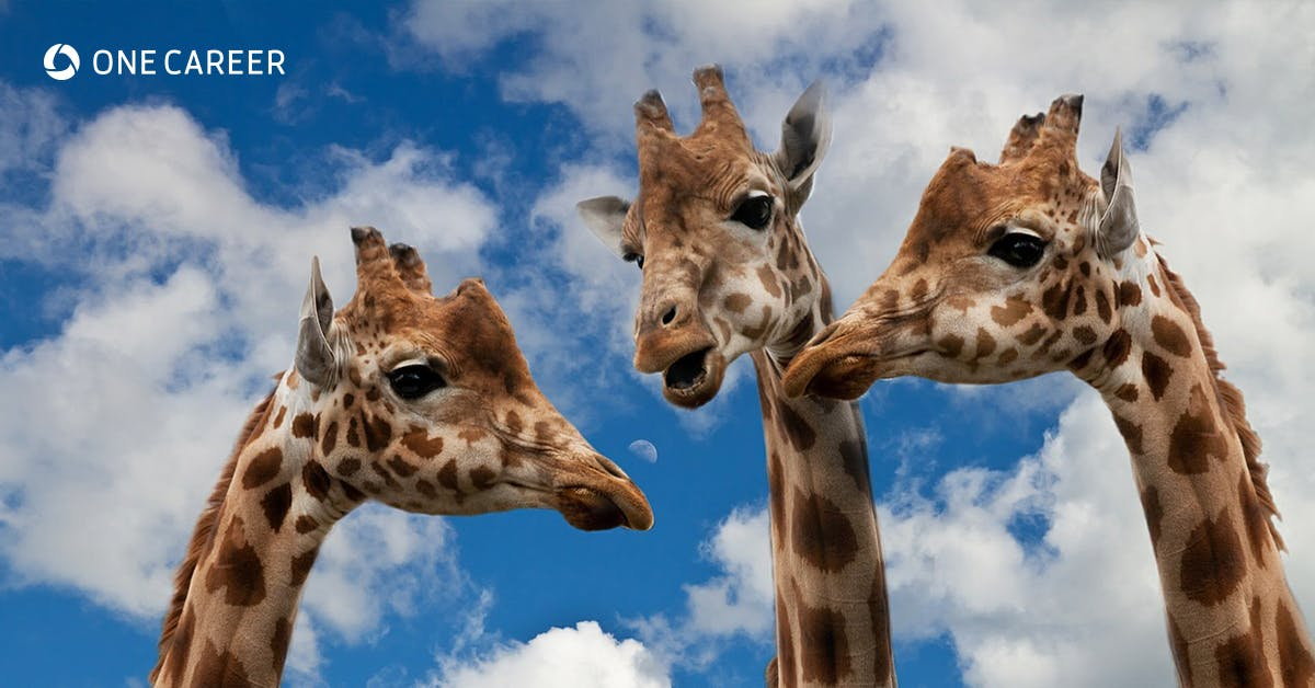 1079 %e7%b5%90%e8%ab%96%e3%83%95%e3%82%a1%e3%83%bc%e3%82%b9%e3%83%88 %e4%b8%8b%e5%8e%9f %e4%b8%ad%e5%b1%b1 giraffes 627031 1280 ogp.jpg?ixlib=rails 3.0